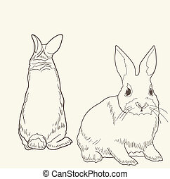 rabbit-drawing - Front and rear view of a rabbit isolated