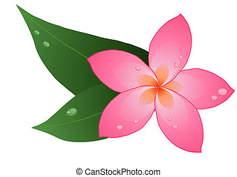 red plumeria - Vector illustration of one red plumeria on...