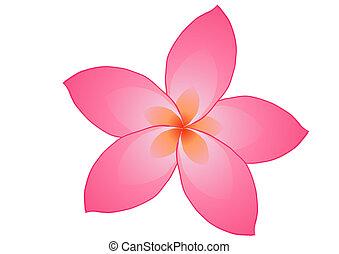 fragrance - Vector illustration of pink frangipani flower...