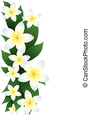 frangipani-flowers - Vector illustration of frangipani...