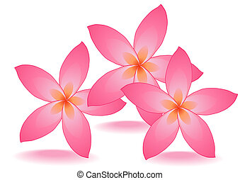 rose flowers - Vector illustration of three rose flowers...
