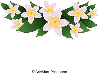 frangipani plumeria border - Vector illustration of...