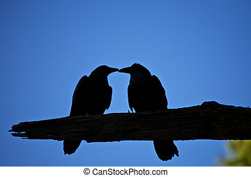 Kissing Crows Silhouette in Yosemite National Park