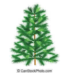 Evergreen tree fir tree - Conifer spruce on white background