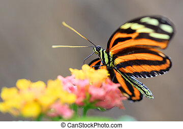 Butterly - Closeup shot of beautiful butterfly on colorful...