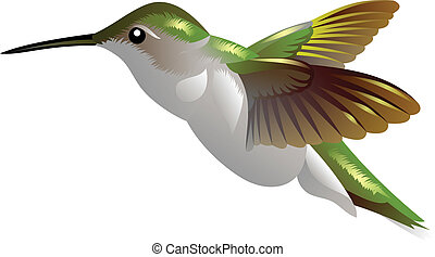 humming bird - illustration of a flying humming bird