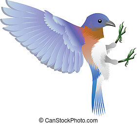 blue bird - illustration of a blue bird