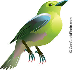 green bird - illustration of a green bird