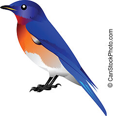 blue bird with orange breast - illustration of a blue bird...