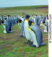 Colony penguis