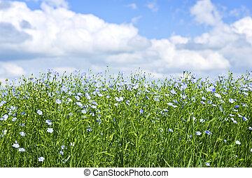 Florecer, lino, campo