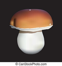 boletus - brown and white boletus, black background