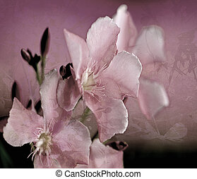 Oleander Flower Art Digital Painting textured Background