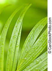 Tropical Palm Leaves and Rain Drops Background