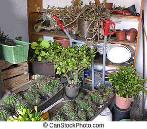 A storage room or cellar for overwintering plants