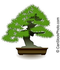 Japanese bonsai tree on white background