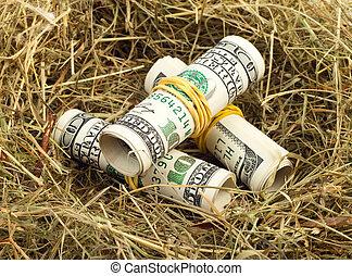 bird nest - Roll of hundred US dollar bill laying in bird...