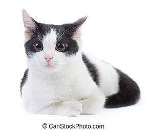 black and white kitten - cute black and white kitten on a...