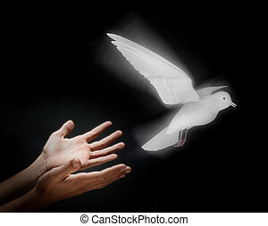 Releasing a Dove - Two hands on a black background releasing...