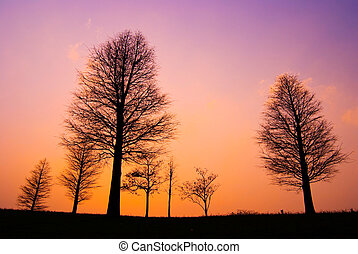 Trees in peaceful winter evening