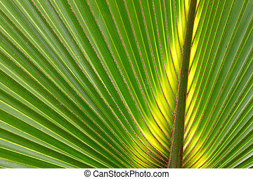 Palmetto Backgournd - Beautiful green coloration of a...
