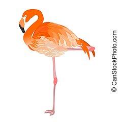 Flamingo illustration raster - Isolated flamingo detailed...