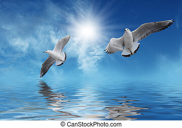 White birds Flying to Sun above blue water in beautiful day.