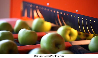 sorting apples, conveyer belt, green apples,HD 1080, 30 fps