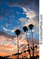 Palm Tree Sunset - Silhouettes of palm trees at sunset in...