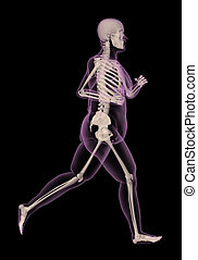 Medical skeleton of an overweight woman running - 3D render...