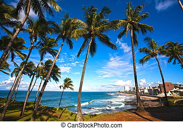 barra beach salvador of bahia - barra beach in the beautiful...