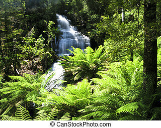 water fall in forest - water fall in rain forest in...