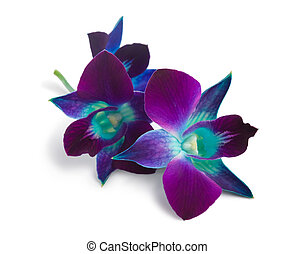 orchid - deep purple orchid isolated on a white