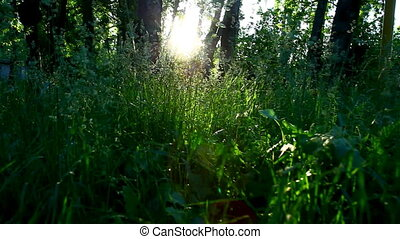 walk in grass at forest sunset