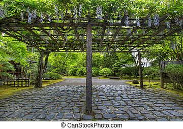 Wisteria in Bloom at Portland Japanese Garden Path -...