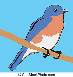 bluebird - illustration of bluebird
