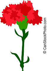 Illustration of Carnation