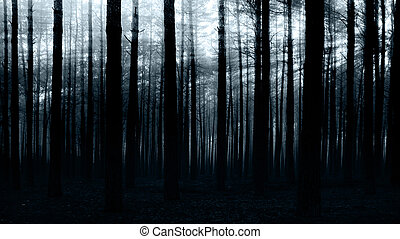 forest  - sunset in the dark forest for you design
