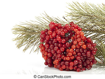 viburnum - Ripe viburnum and pine branch on a white...