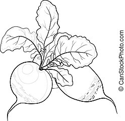 Radish with leaves, contours - Vegetable, radish with...