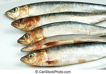 sardine, organique, quelques-uns, clair, fond, frais