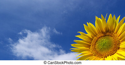 Sunflower in the sky. Element of design.