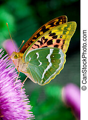 Beauty butterfly on flower Nature composition