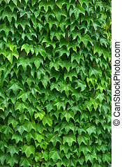 Texture of leafs. Nature composition. Element of design.