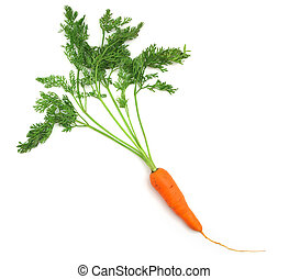 Isolated carrot - One isolated carrot. Element of food...