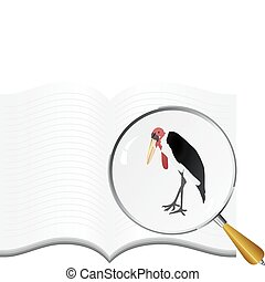vectors marabou under the magnifying glass