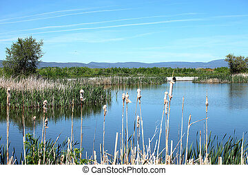 Marshes in South Oregon - National wildlife refuge marshes,...