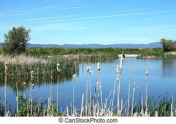 pântanos, SUL, Oregon