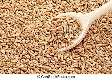 wheat cereals diet food - close up of wheat in wooden spoon...