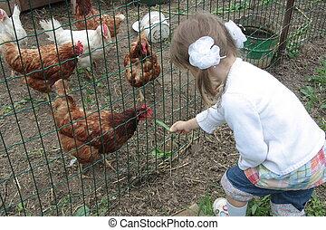 Farm Girl - Little cute girl feeding chickens in farm